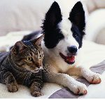 dog+and+cat